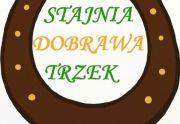 Dobra Stajnia - Jazda konna