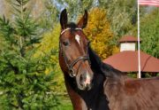 Szkółka jeździecka - duże konie