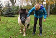 Stajnia Rotmistrz nauka jazdy konnej