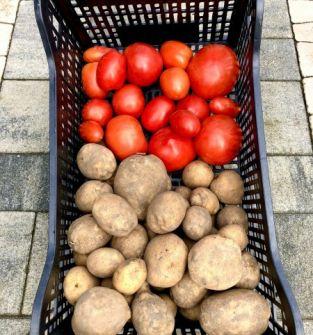 Ziemniaki oraz pomidory wolne od chemii oraz GMO