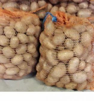 Ziemniak jadalny Gala