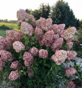 Rośliny iglaste i liściaste