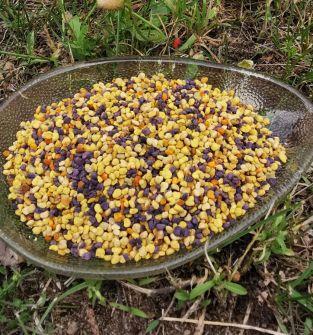 Kit pszczeli, pyłek kwiatowy