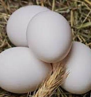 Jaja od kur z wolnego wybiegu