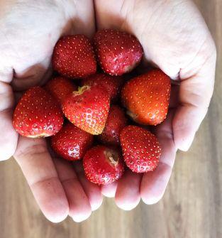 owoce truskawek owoce malin letnich i jesiennych