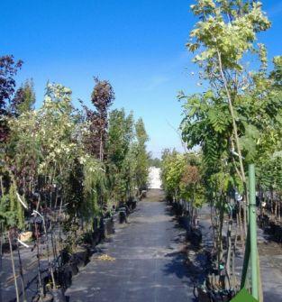 Rośliny lisciaste