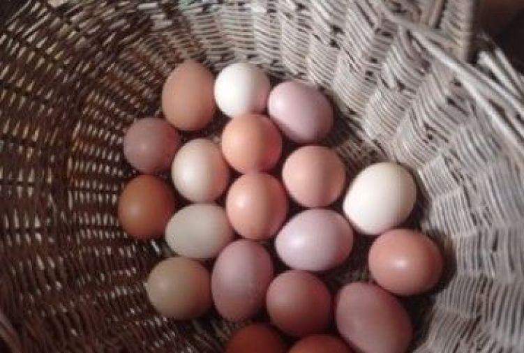 Jajka przepiórcze, kurze, wydmuszki jaj strusich