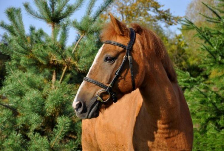 Szkółka jeździecka - pony/kuce